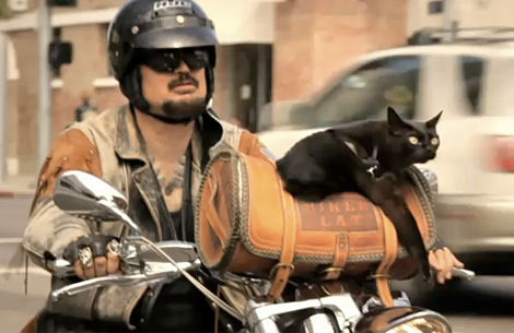 cat motorcyclist auto
