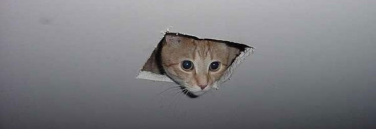 ceiling cat watching